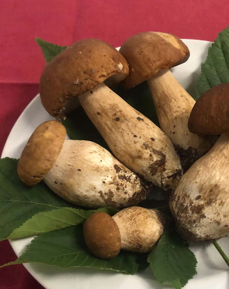 verdure-di-stagione-funghi-porcini